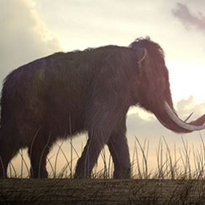 Depiction of a woolly mammoth from the Pliocene era