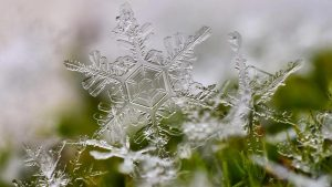 Snowflake in the moss